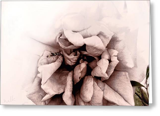 Duo Tone Greeting Cards - Temptation of the Rose Greeting Card by Louise Kumpf
