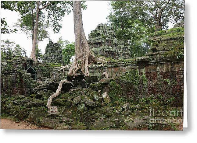 Tree Roots Greeting Cards - Tempe Ta Prohm VI Greeting Card by Chuck Kuhn
