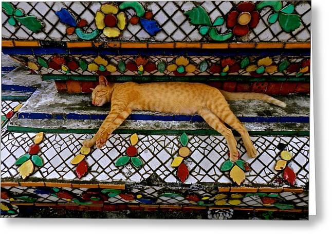 Temple Cat Nap Greeting Card by Joe Wyman