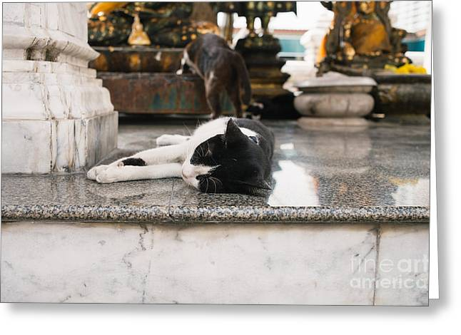 Napping Cat Greeting Cards - Temple Cats Greeting Card by Dean Harte