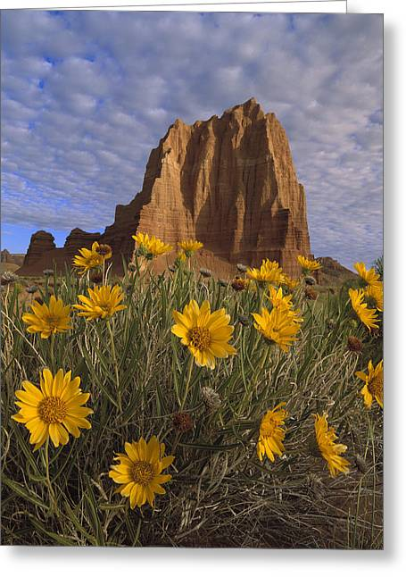 Cathedral Rock Greeting Cards - Temple Of The Sun With Sunflowers Greeting Card by Tim Fitzharris