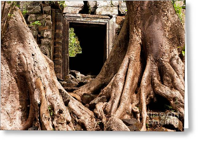 Tree Roots Greeting Cards - Temple Ruins 01 Greeting Card by Rick Piper Photography