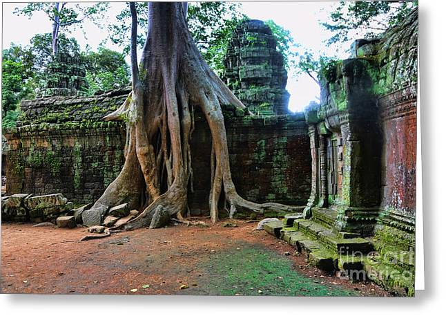 Tree Roots Greeting Cards - Temple Ta Prohm II Greeting Card by Chuck Kuhn