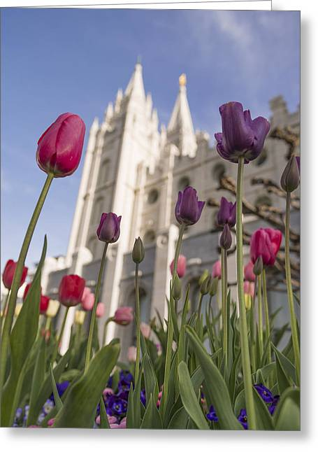 Salt Lake City - Utah Greeting Cards - Temple Tulips Greeting Card by Chad Dutson