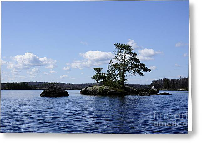Boundary Waters Greeting Cards - Tenacious Tree Greeting Card by Larry Ricker