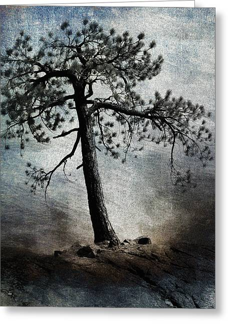 Lone Pine Greeting Cards - Tenacity Greeting Card by Carol Leigh
