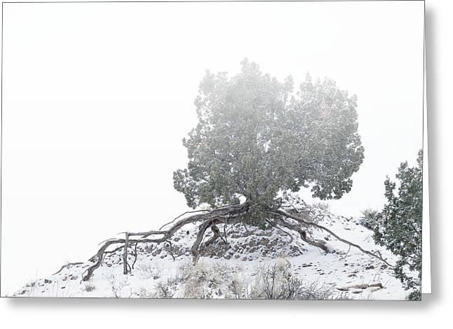 Christmas Greeting Photographs Greeting Cards - Tenacity Greeting Card by Mary Lee Dereske