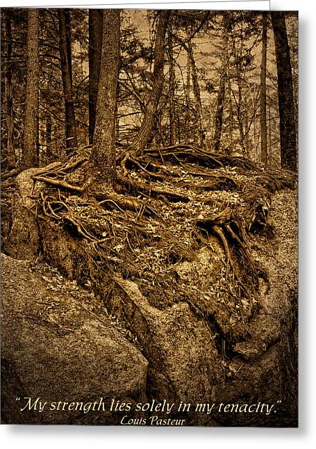 Obstinacy Greeting Cards - Tenacity - Roots - Inspirational Quote Greeting Card by Nikolyn McDonald