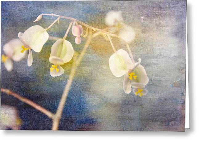Soft Light Greeting Cards - Tender Begonia Greeting Card by Jan Amiss Photography