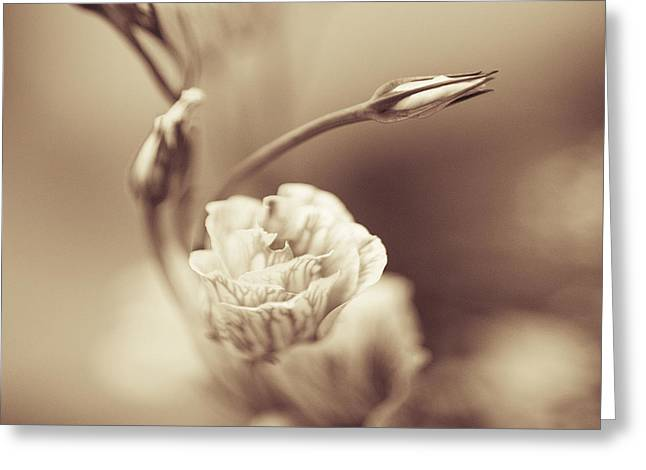 Tender Thoughts Greeting Cards - Tender Flower Greeting Card by Mark-Meir Paluksht
