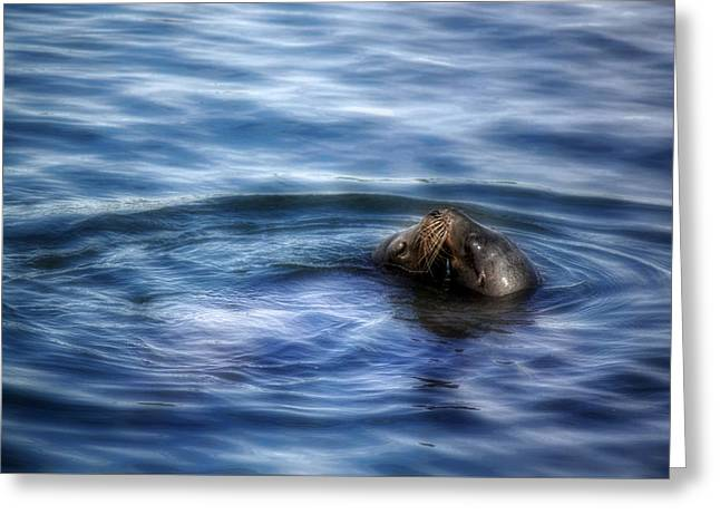 California Sea Lions Greeting Cards - Tender Kisses Greeting Card by Melanie Lankford Photography