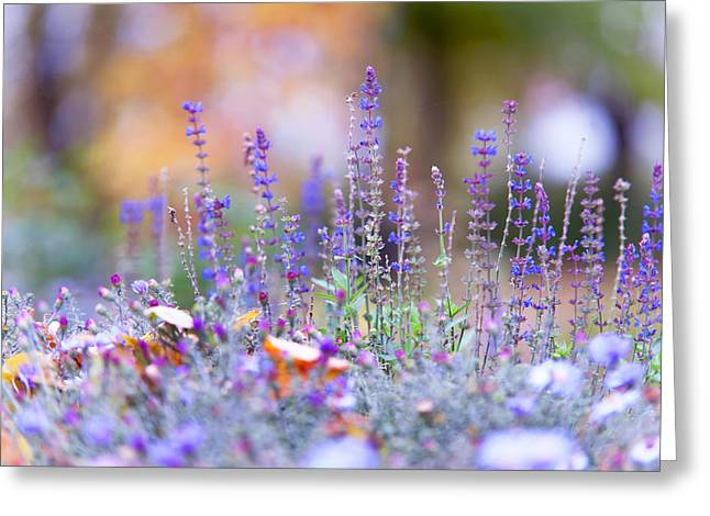 Living Beings Greeting Cards - Tender Lavender Greeting Card by Jenny Rainbow