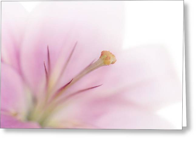 Lilium Greeting Cards - Tender Lily Greeting Card by Melanie Viola