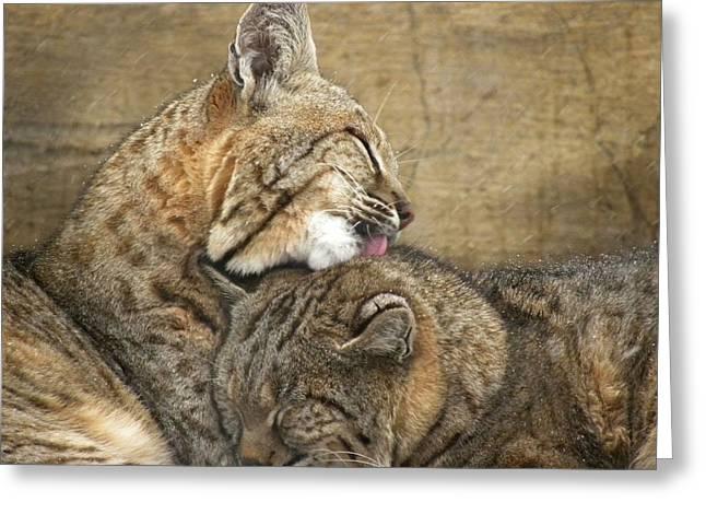 Tender Loving Care Greeting Card by Teresa Schomig