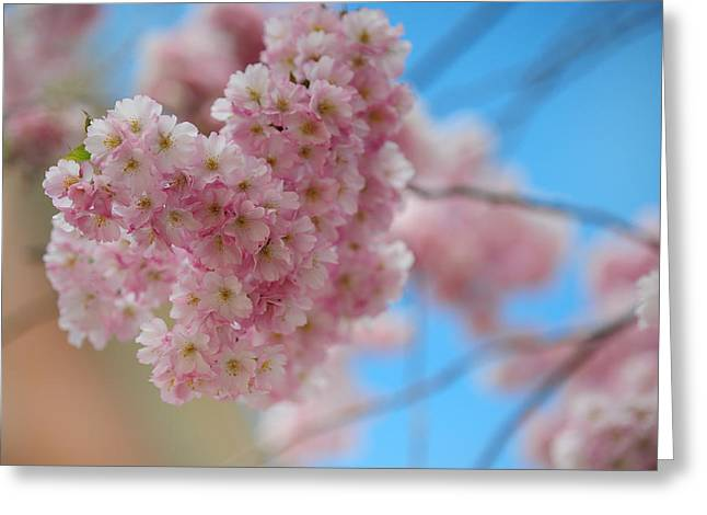 Tender Whisper. Pink Spring In Amterdam Greeting Card by Jenny Rainbow
