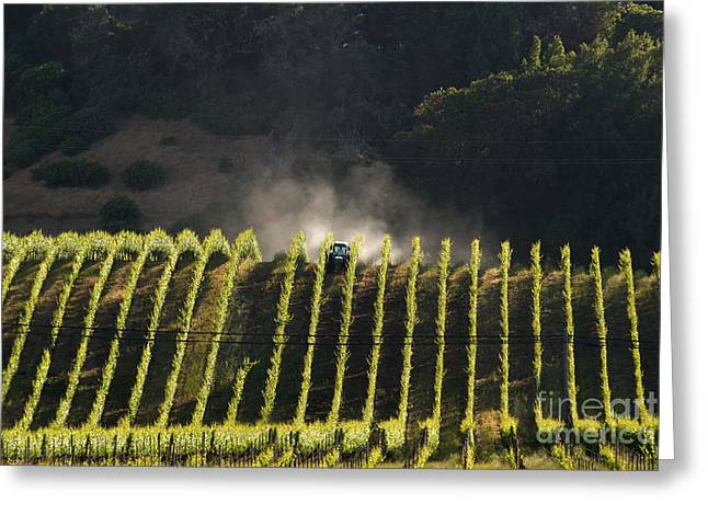 North American Vine Greeting Cards - Tending A California Vineyard Greeting Card by Ron Sanford