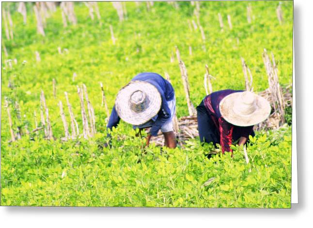Farmers Field Greeting Cards - Tending the crops  Greeting Card by A Rey