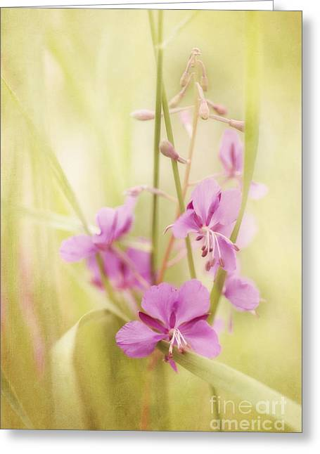 State Flowers Greeting Cards - Tendresse Greeting Card by Priska Wettstein