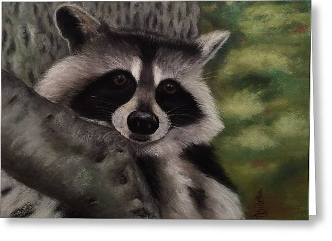 Tennessee Pastels Greeting Cards - Tennessee Wildlife - Raccoon Greeting Card by Annamarie Sidella-Felts
