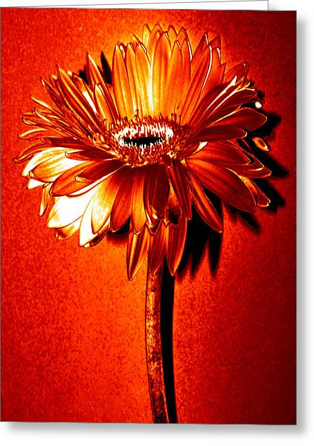 Sunburst Floral Still Life Greeting Cards - Tequila Sunrise Zinnia Greeting Card by Sherry Allen