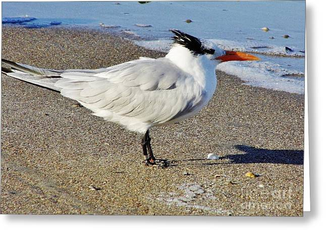 Best Ocean Photography Greeting Cards - Tern - On The - Beach Greeting Card by D Hackett