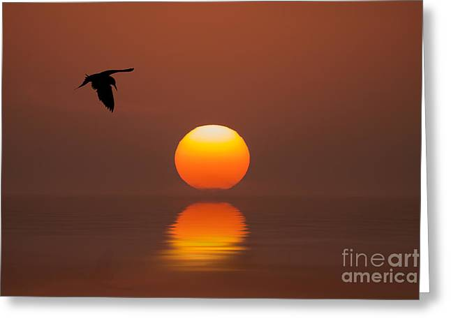 Tern Digital Art Greeting Cards - Tern Greeting Card by Bahadir Yeniceri