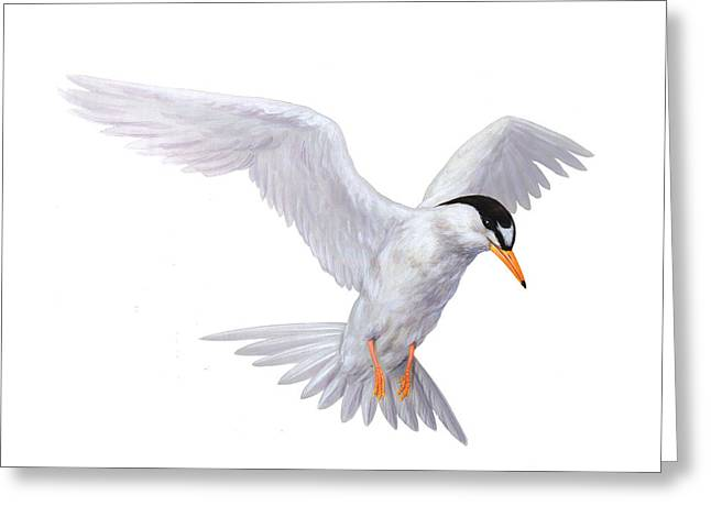 Tern Greeting Card by Carlyn Iverson