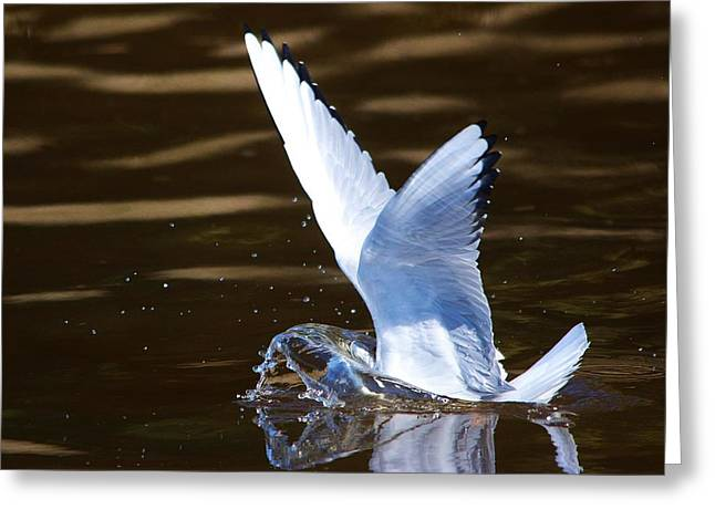 Tern Digital Art Greeting Cards - Tern Fishing Greeting Card by Paulette Thomas