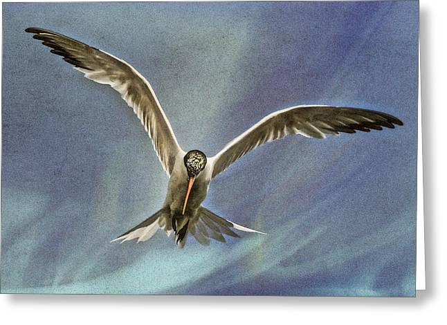 Tern Digital Art Greeting Cards - Tern in flight Greeting Card by Jason Keene