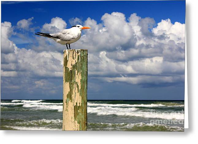 Water Fowl Pyrography Greeting Cards - Tern On A Piling Greeting Card by Sean Hughes