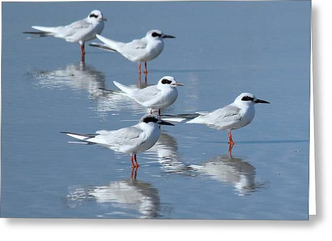 Tern Greeting Cards - Tern Tern Tern Greeting Card by Rosanne Jordan