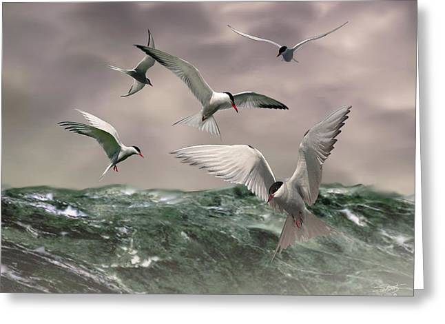 Arctic Terns Greeting Cards - Terns Feasting at Sea Greeting Card by IM Spadecaller