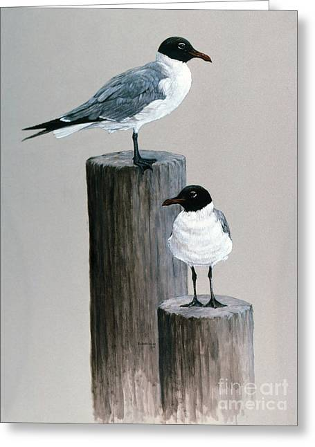 Tern Paintings Greeting Cards - Terns on Pilings Greeting Card by Richard Hauser