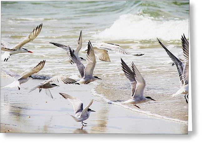 Tern Digital Art Greeting Cards - Terns Greeting Card by Paulette Thomas