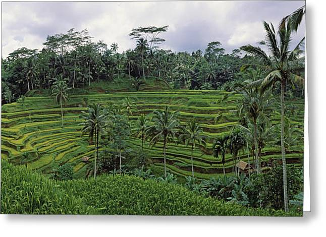 Field. Cloud Greeting Cards - Terraced Rice Field, Bali, Indonesia Greeting Card by Panoramic Images