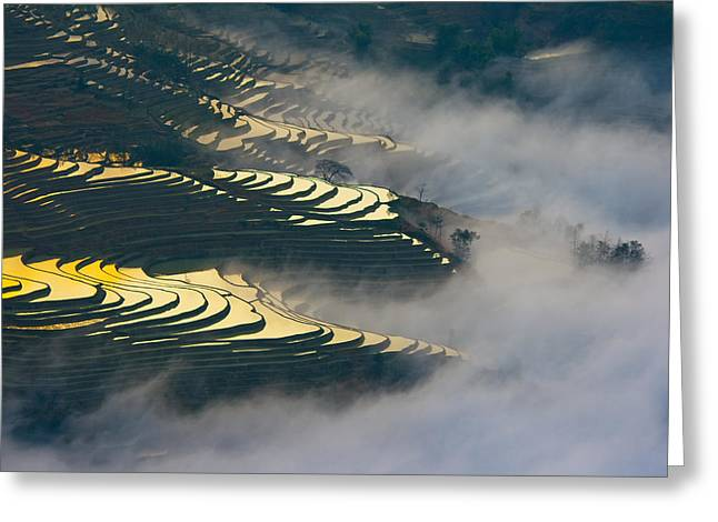 Autum Abstract Greeting Cards - Terraced rice field Greeting Card by Jason KS Leung