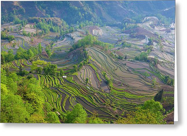 Terraced Rice Fields, Yuanyang, China Greeting Card by Art Wolfe
