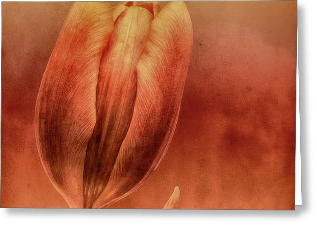 Abstract Tulips Greeting Cards - Terracotta Greeting Card by Wim Lanclus