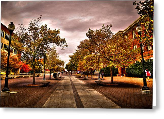 Campus Landscape Greeting Cards - Terrell Mall on the Washington State Campus Greeting Card by David Patterson
