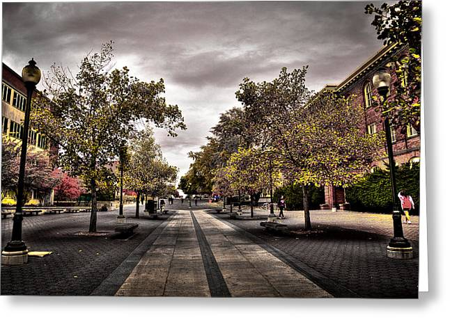 Campus Landscape Greeting Cards - Terrell Mall on the WSU Campus Greeting Card by David Patterson
