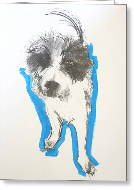 Scruffy Greeting Cards - Terrier, 2012 Charcoal And Oil On Paper Greeting Card by Sally Muir