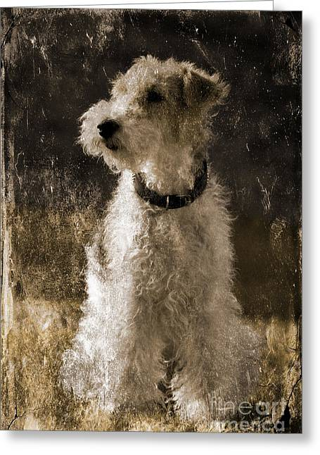 Dog Portraits Greeting Cards - Terrier antique Greeting Card by Lutz Baar