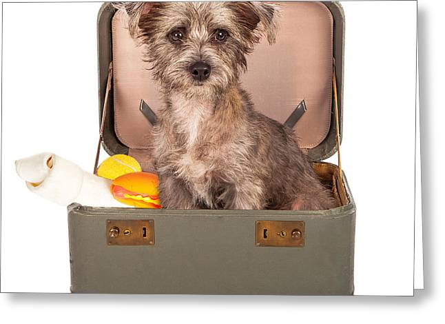 Scruffy Greeting Cards - Terrier Dog in Suitcase Greeting Card by Susan  Schmitz