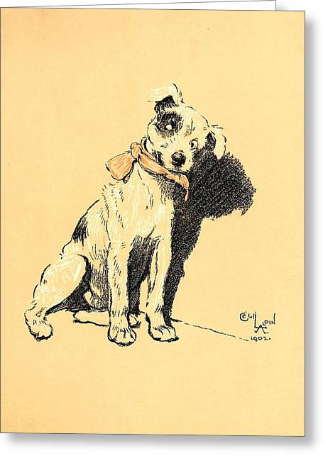 Aldin Greeting Cards - Terrier With Ribbon Bow Collar - A Dog Day Collection 2 of 27 Greeting Card by Cecil Aldin