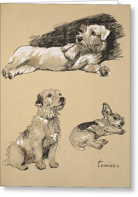 Terrier Dog Drawings Greeting Cards - Terriers, 1930, Illustrations Greeting Card by Cecil Charles Windsor Aldin