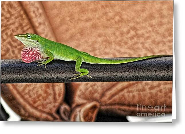 Gecko Print Greeting Cards - Territorial Greeting Card by Chris Fleming
