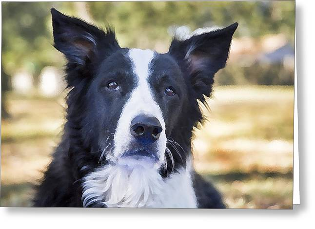 Working Dog Greeting Cards - Tessie Good Girl Greeting Card by Rich Franco