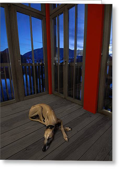 Lazy Red Dog Greeting Cards - Testarossa Greeting Card by Robert Komarek