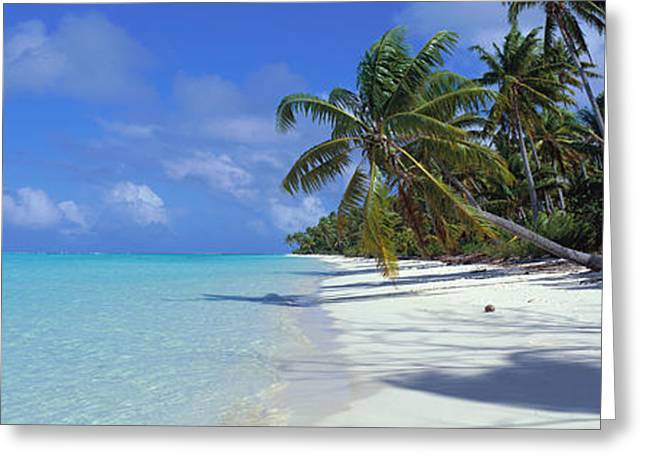 Coconut Palms Greeting Cards - Tetiaroa Atoll, French Polynesia, Tahiti Greeting Card by Panoramic Images