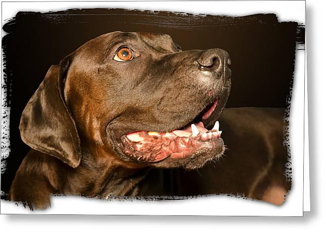 Tex the Dog Greeting Card by Harold Bonacquist